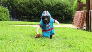 6 Dogs Who Are Ready For Super Bowl Sunday