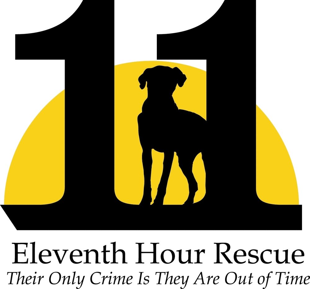 eleventh-hour-rescue