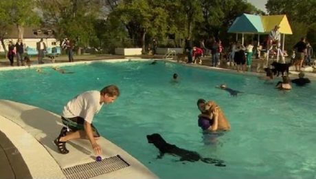 Pups Play In Public Pools At Calgary's Dog Day