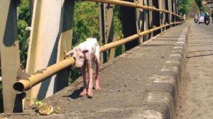 Miraculous Transformation: Passerby Could Not Ignore Stray Dog Covered In Mange