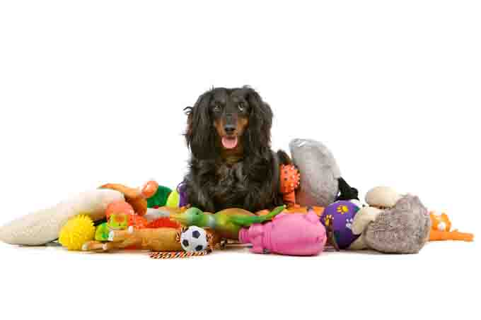 spoil-dog-with-toys