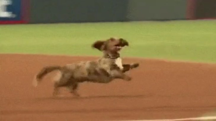 weiner-dog-race-baseball