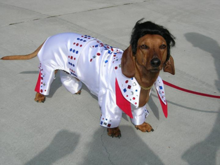 Top 10 Halloween Costumes For Wiener Dogs [GALLERY]
