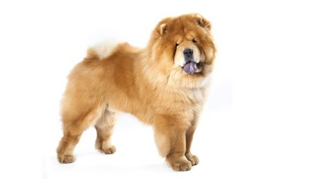 Mythical And Legendary Origins Of Dog Breed Traits