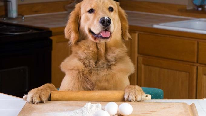 dog in kitchen with rolling pin, eggs, and flour