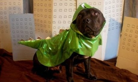 "23 Dogs Who ""Love"" Halloween Costumes [VIDEO]"