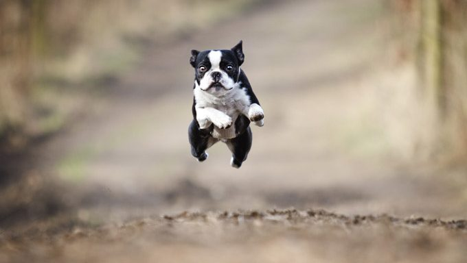 dog jumping down forest trail