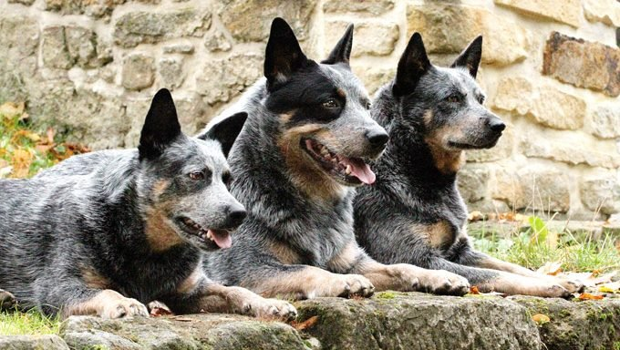 three dogs against stone wall