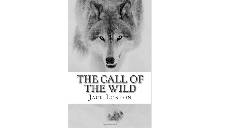 Cover art for The Call of the Wild. A wolf looks out from a snowy background.