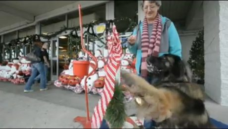 Dog Rings Bell To Help Salvation Army Raise Money