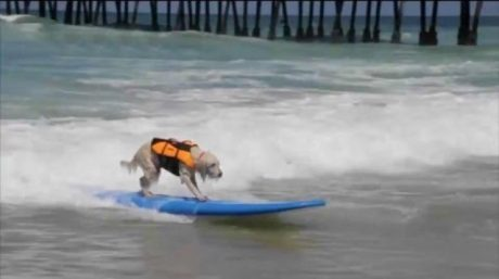 Amazing Dogs Surf For Charity