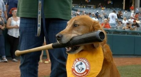 Derby And Rookie: Trenton Thunder Bat Dogs