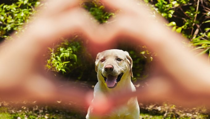 hands making heart shape around dogs face