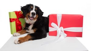 Holiday Gift Guide: Best Dog Accessories For 2016