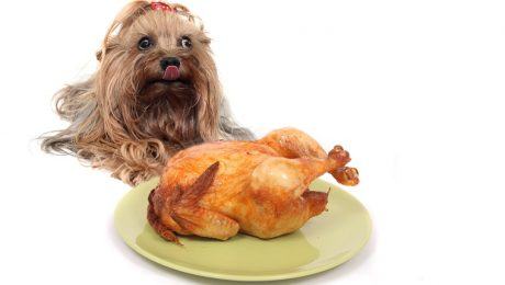 7 Homemade Thanksgiving Dog Food And Treat Recipes