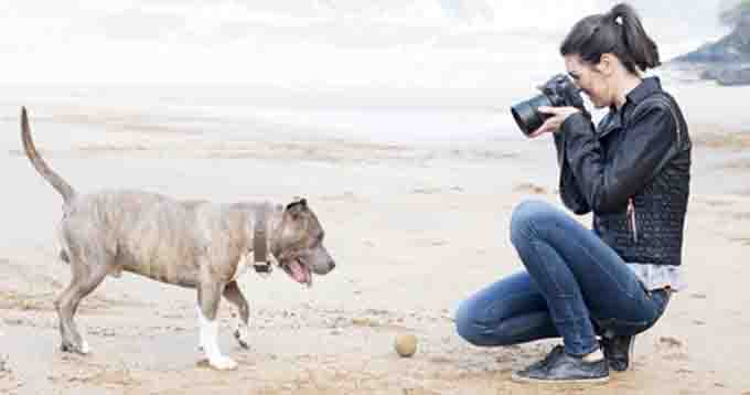 how-to-take-dog-pictures