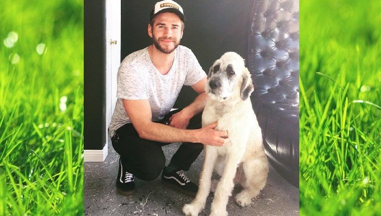Actor Liam Hemsworth kneels next to his big, white puppy named Dora.