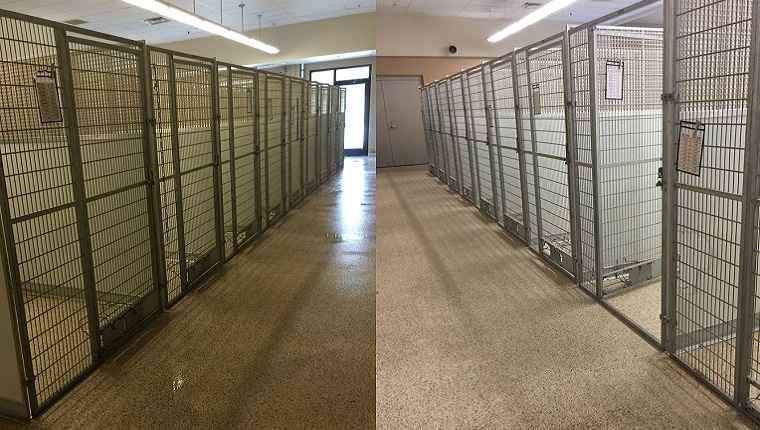 Rows of kennels from Summit County Animal Control stand completely empty.