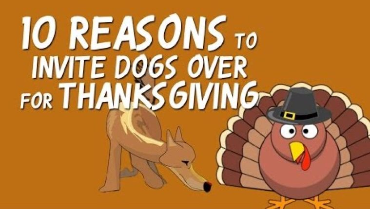 ten reasons to invite dogs for thanksgiving video thumbnail