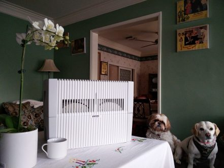 Pet Allergies? Do Air Purifiers & Washers Really Work?