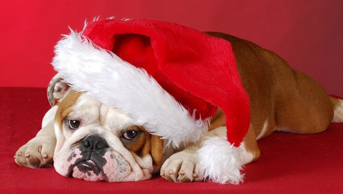 25 Dogs Staying Up All Night To See Santa Pictures Dogtime