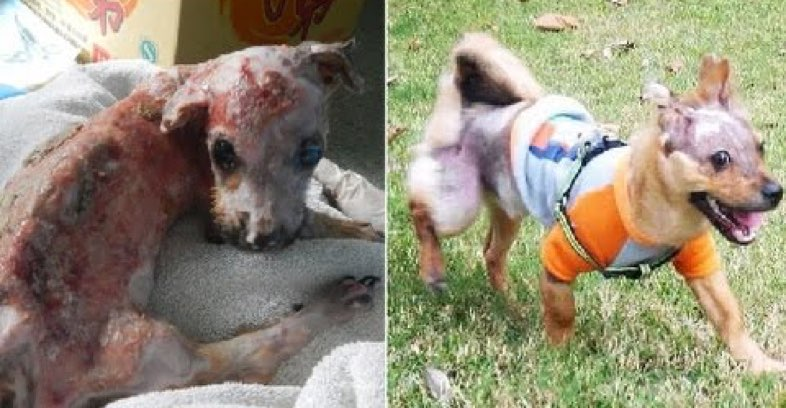Puppy Burned And Dropped 4 Stories For Chewing Phone