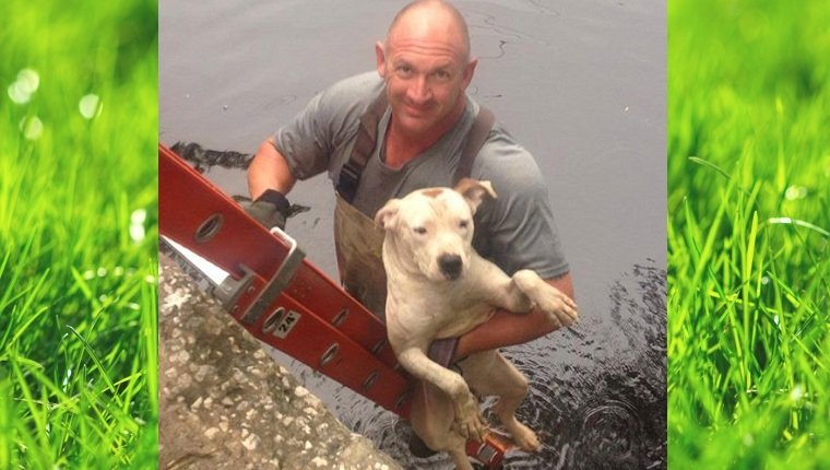 A worker climbs a ladder out of the river with the Pit Bull tucked under his arm.