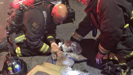 Firefighters Revive Dog With Snout Breathing Mask