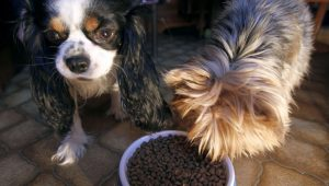 Experiment Shows Dogs Will Give Food To Their Friends