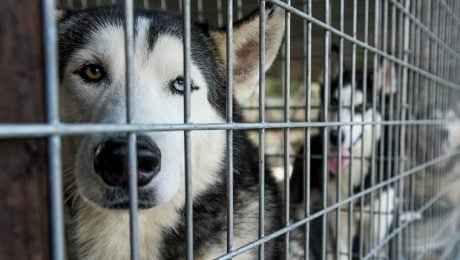 100 Dogs Need Homes After Being Rescued From A Puppy Mill In Florida