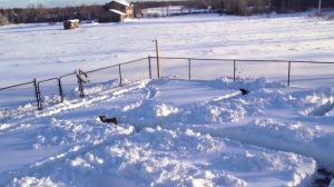 Build A Snow Maze For Your Dogs