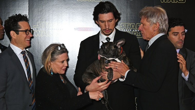 Gary the French Bulldog is held by several stars of the new Star Wars film.