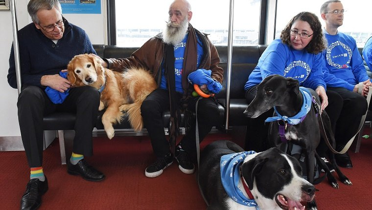 Several comfort dogs sit with passengers in an airport terminal.