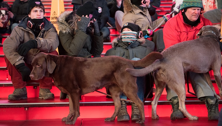 Two dogs stand in the audience seats. People are sitting in full winter gear behind them.