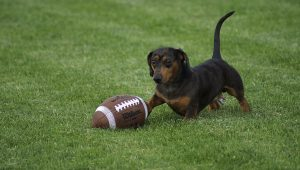 6 Super Bowl Safety Tips To Keep Your Dog Out Of Harm's Way