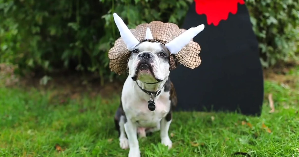 Top 10 incredibly easy diy dog costumes dogtime top 10 incredibly easy diy dog costumes solutioingenieria Image collections