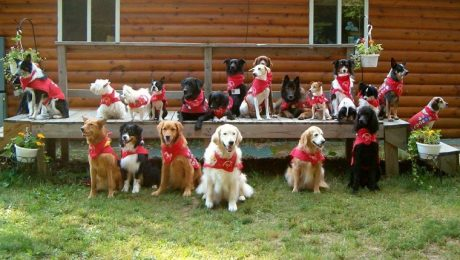 Dog Scouts of America – A Fun Way To Bond With Your Dog And Community