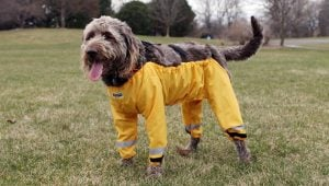 Silly Internet Debate Causes Dog Pants Sales To Skyrocket