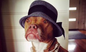 25 Dogs All Dressed Up For Dress Up Your Pets Day