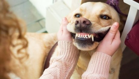February Is National Pet Dental Health Month: Clean Those Teeth!