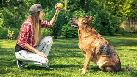 10 Fun, Impressive Tricks You Can Teach Any Dog