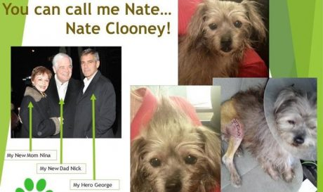 George Clooney Adopts A Dog Nobody Wanted