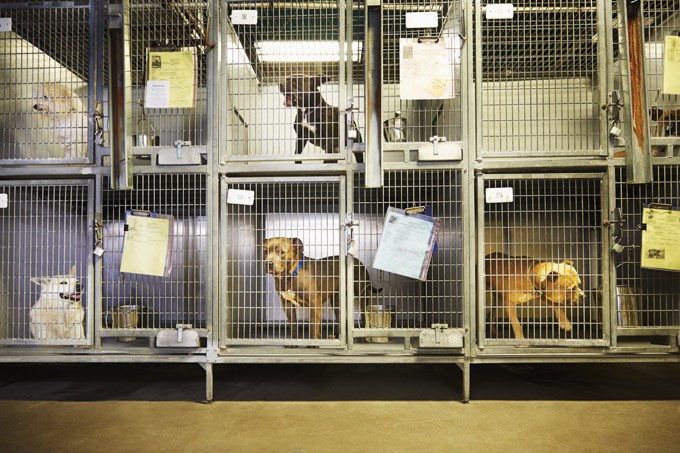 Animal Care And Control Center Of New York City