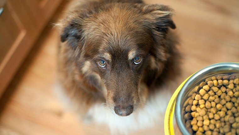 A dog looks up next to a bowl of food.