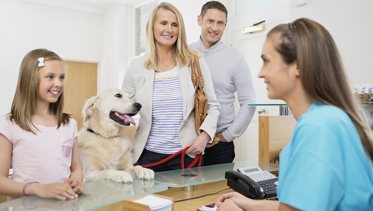 Dog owners stand at a counter in a vet's office with their Golden Retriever.