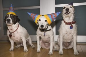 Dogust: How To Throw A Dog Birthday Party