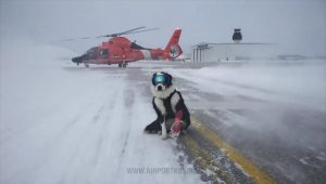 Airport Security Dog Stands In Heroic, Action-Movie Pose On Snowy Runway
