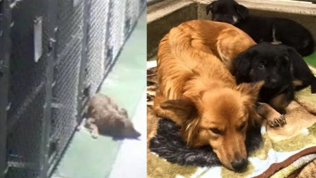 Motherly Dog Escapes Kennel To Comfort Crying Foster Puppies
