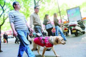 Seeing Eye Dog Stolen For Meat In China Returned To Owner