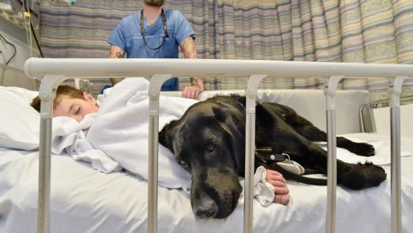 Service Dog Comforts Autistic Boy With Seizures On Trip To The Hospital